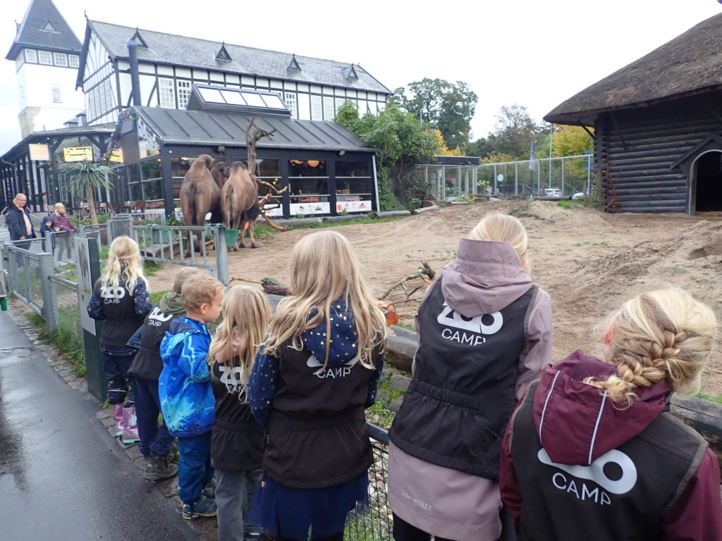 Zoo camp for de 6-8 årige